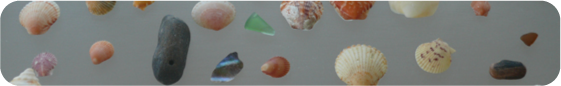 Don't forget the seashells, they're everywhere!